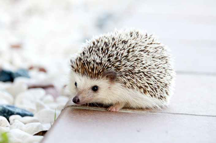 animal pet cute baby